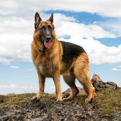 Blog mifauna art culos para perros - Cercados para perros ...